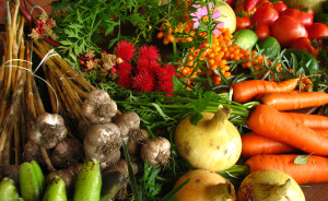 Ecologically_grown_vegetables_feature