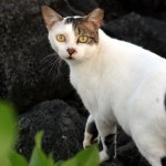 Animal welfare fund seeks grant proposals for spaying, neutering feral ..