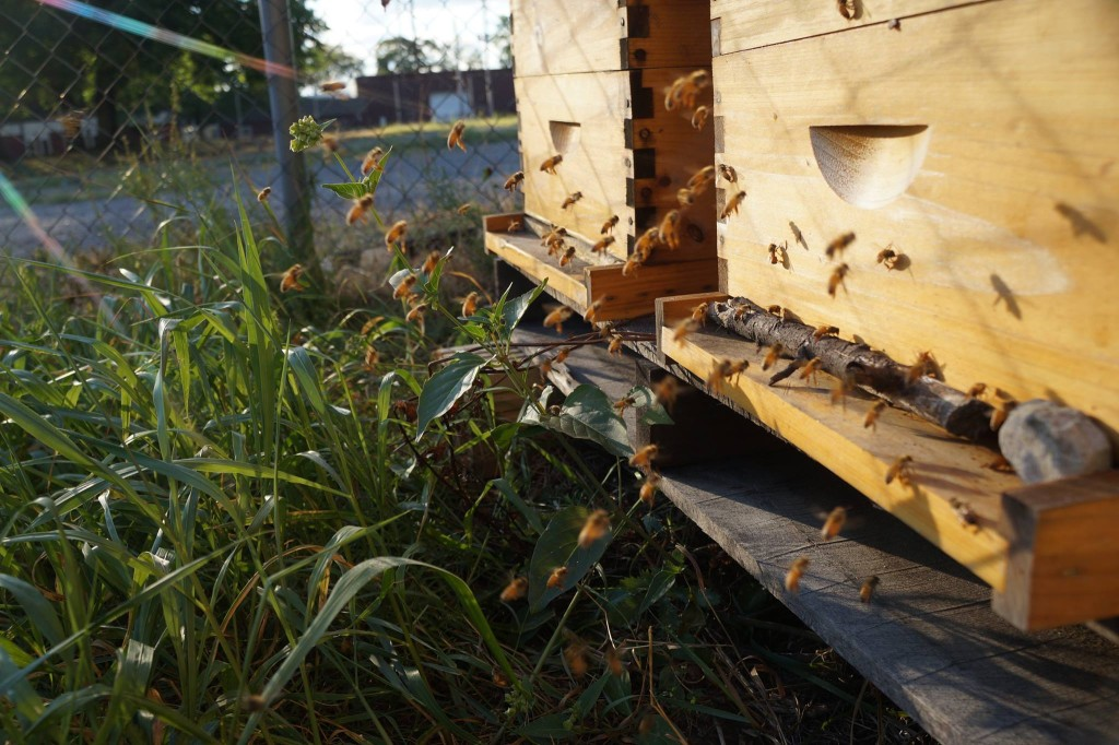 Local beekeeping involves utmost responsibility, because the improperly keeping your hives could also affect neighboring apiaries. (Photo: Sarah Smithers)