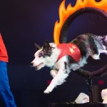 Rescue stunt dog troupe performs on Civic Theatre stage