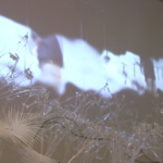 Immersive exhibit at University of Akron's Emily Davis Gallery combines technology, architecture