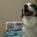 Nonprofit pays it forward with doggie daycare