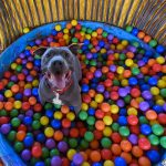 'Playing Dog' fundraiser offers games, food, entertainment for Akronites and ..