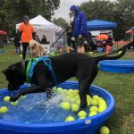 Dogs, owners enjoy RunningDog fundraiser despite soggy weather