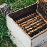 Beekeeping in Akron carries benefits for local farmers, food-based system
